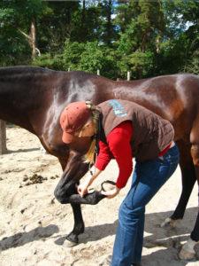 Veterinär tittar på hoven på en häst